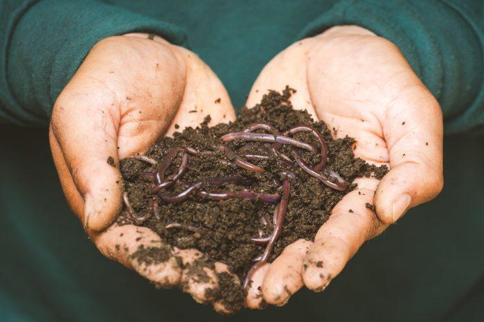 La Unión Europea aprueba la comercialización de gusanos de harina como alimentos