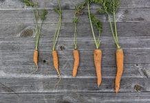 Huerto urbano: las 5W de cultivar en casa