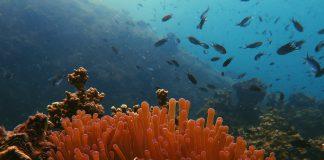 Hawaii y Tailandia protegen los arrecifes de coral de protectores solares contaminantes